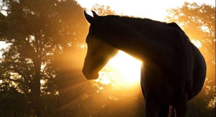 8 days dedicated to the Horse Festival in Cerea