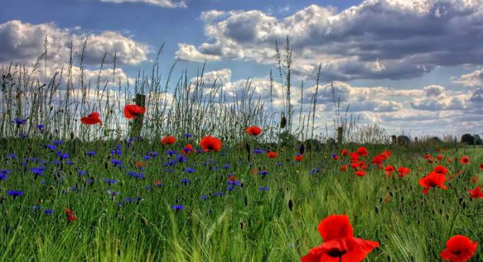 Ecological holiday in the countryside between Verona and Mantua