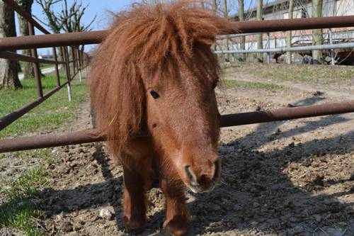 Pony James per i bambini